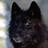 WolflingBlack