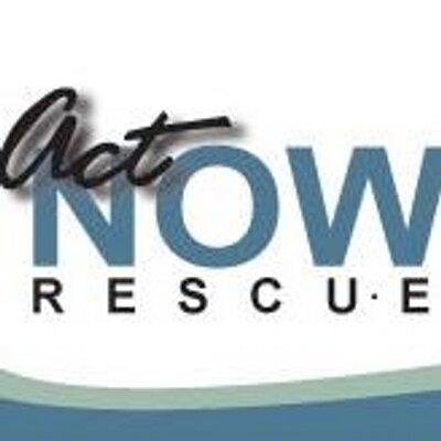 actnow rescue actnowrescuestl twitter