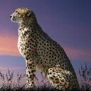tratatyhki avatar