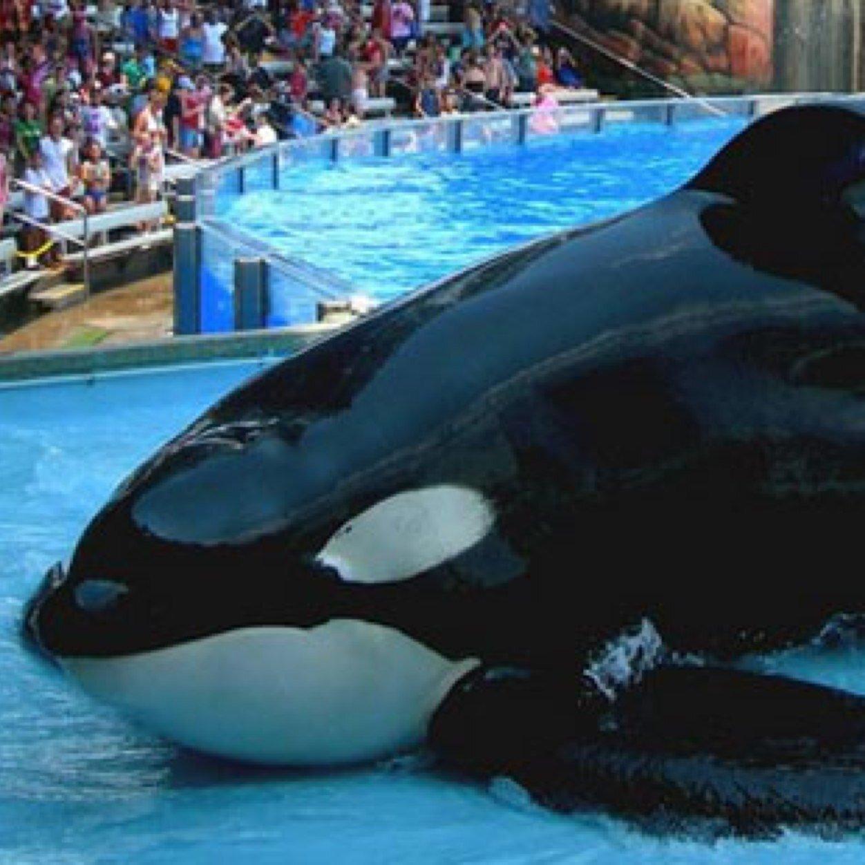 orca account