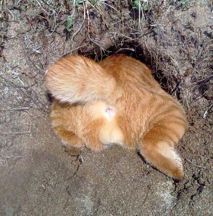 Котя попа