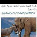 شاه بندر النحاسه (@0123456789az241) Twitter