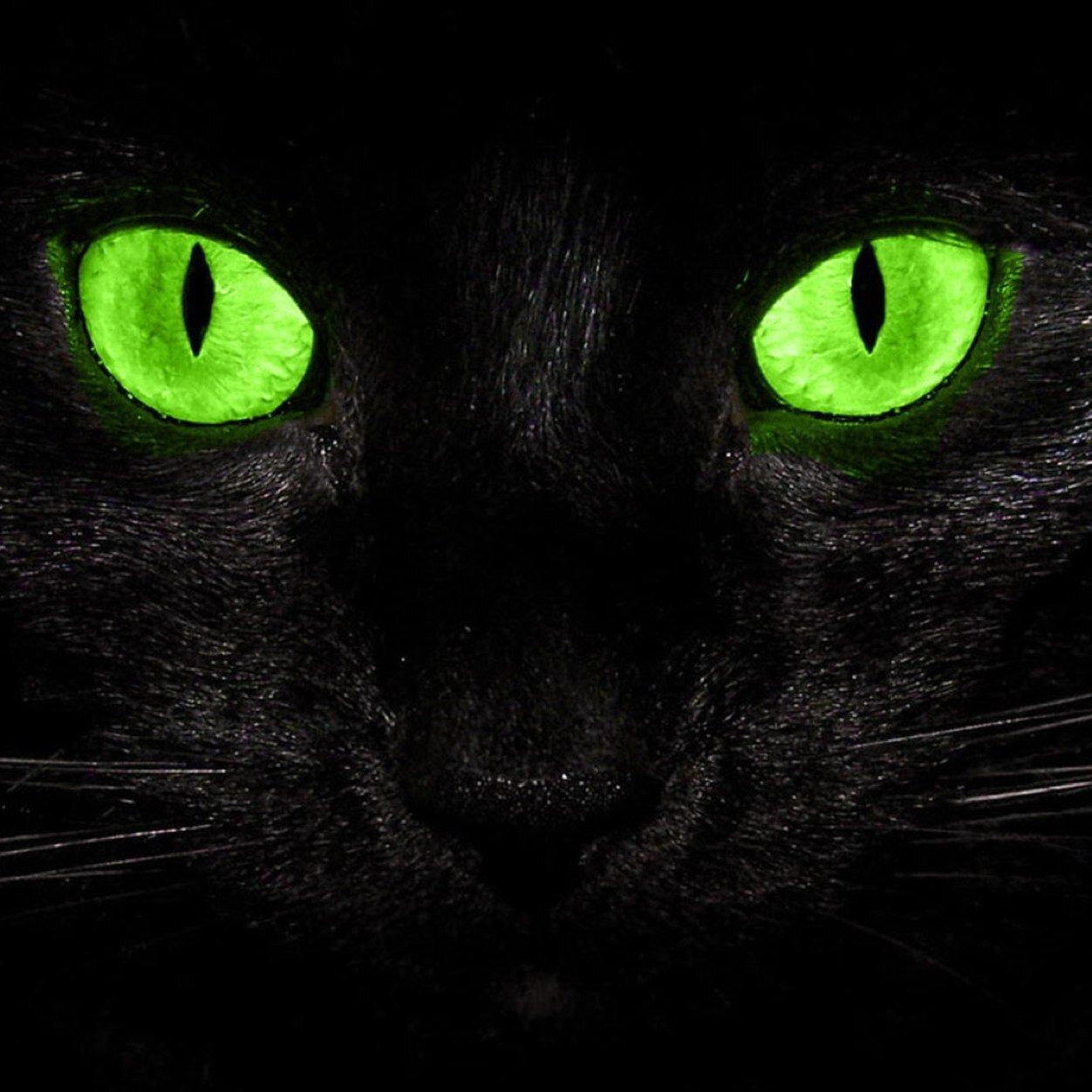 загрузки глаза кошки светятся в темноте картинки этап