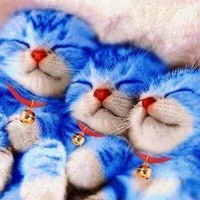 かわいい動物画像bot Cuteanimal 1 Twitter