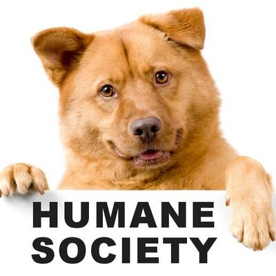 humane society of mt humanesocietymt twitter
