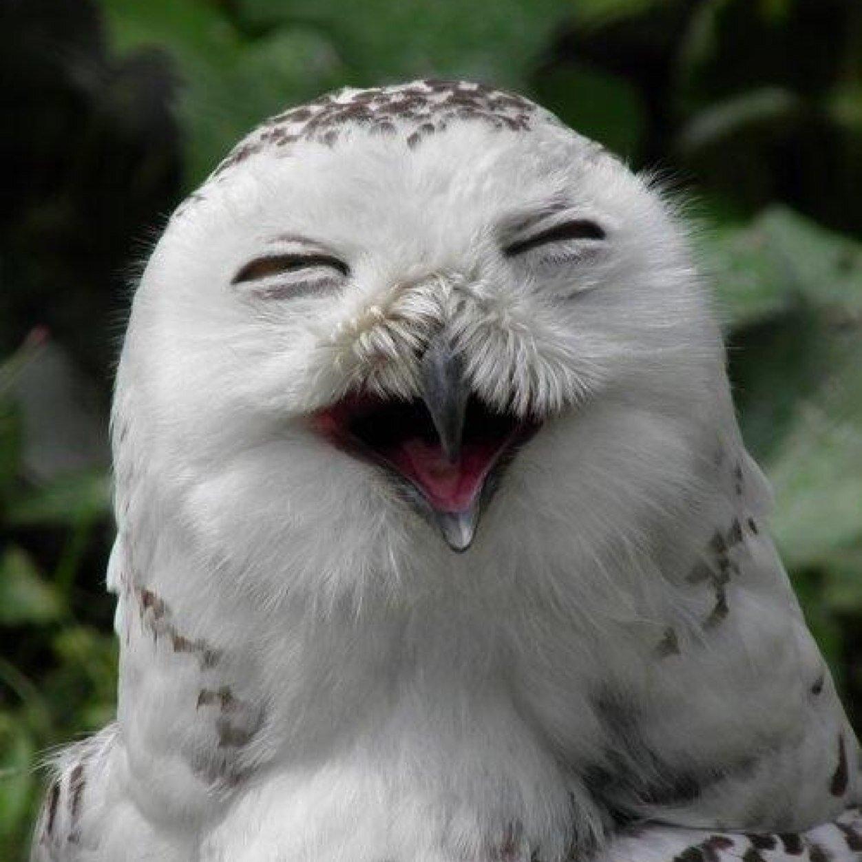 могут совы смеются картинки есть сущности погребение