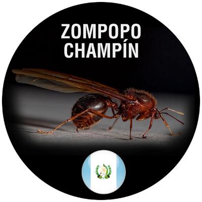 Sompopo Ants Www Imagenesmy Com