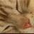 野良猫丸 (@wildcat_x)