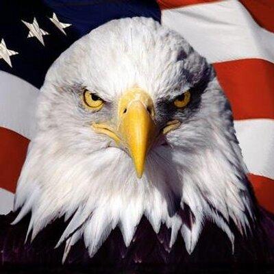 the 520 bald eagle the520baldeagle twitter