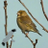 AngryGreenfinch