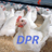 @dailypoultry Profile picture