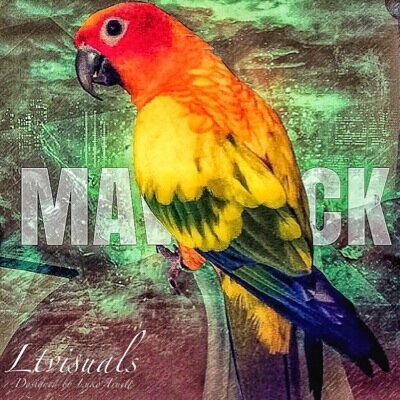 Maverick the Parrot MaverickParrot Twitter