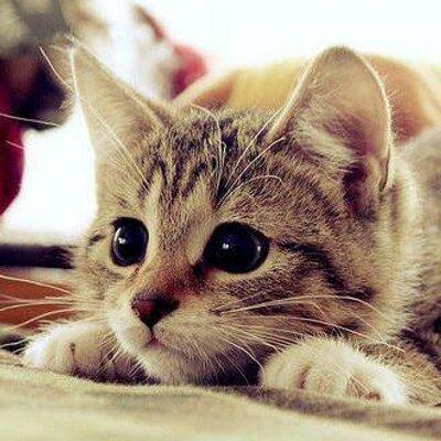 ネコ癒し画像 : かわいくてたま...