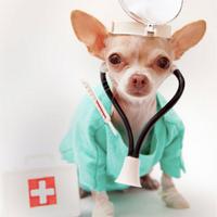 veterinarios's Twitter Account Picture