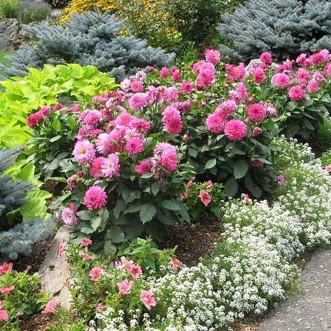 GO Gardening Videos gogardeningvids Twitter