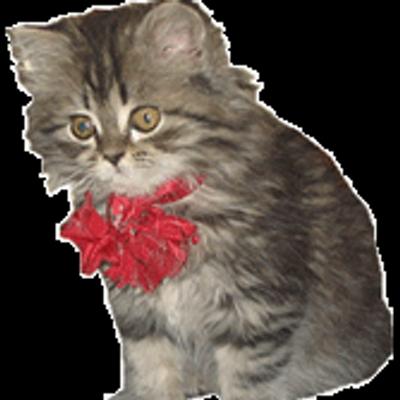 Картинки анимации кошки