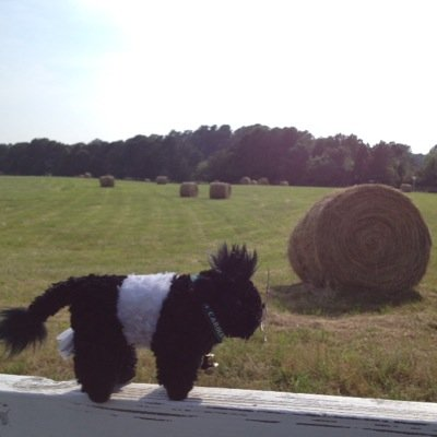 @FearringtonBeltie (@BeltieTravels) Twitter profile photo
