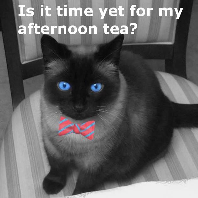 Ming Memes On Twitter Realgrumpycat Gma Yay Grumpy Cat Http T Co Wf8ktzt3xv The best grumpy cat memes and images of november 2020. twitter