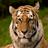 Panthera1Tigris