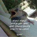 احمد عبده الجبعي (@59aa418f576f495) Twitter