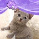 子猫大好き (@0920Nmb) Twitter