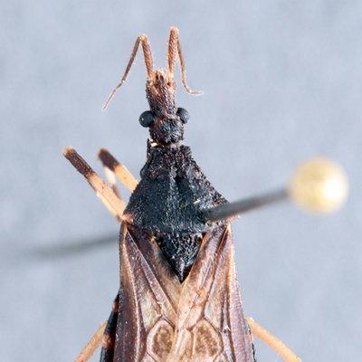 Logo de Insect Museum