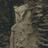 zeroanaphora