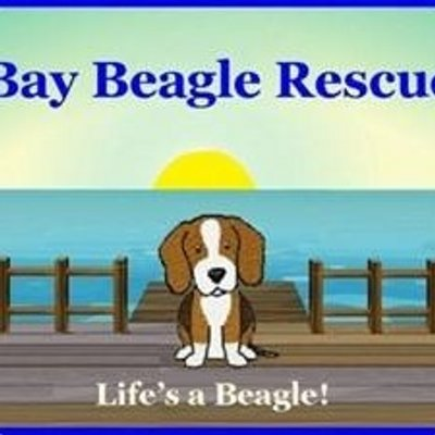 Bay Beagle Rescue on Twitter: