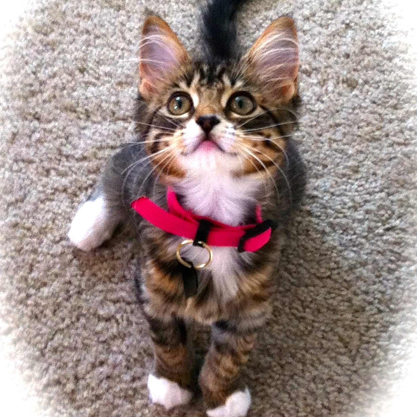Cats and Kittens (@Cats__N_Kittens) | Twitter