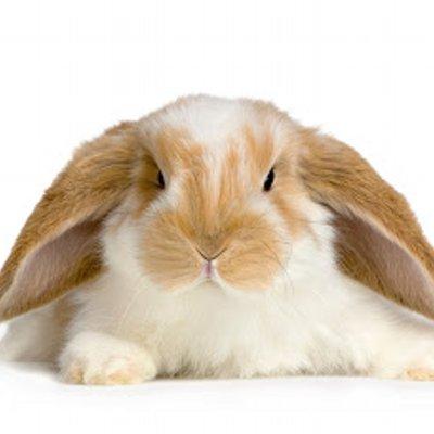 Angry Rabbit (@realangryrabbit) | Twitter