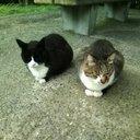 姉妹猫 (@197X11) Twitter
