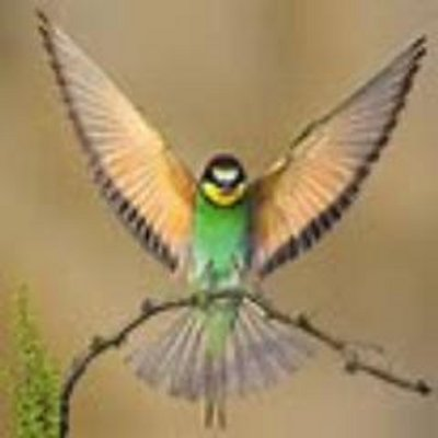 free bird stayafreebird twitter