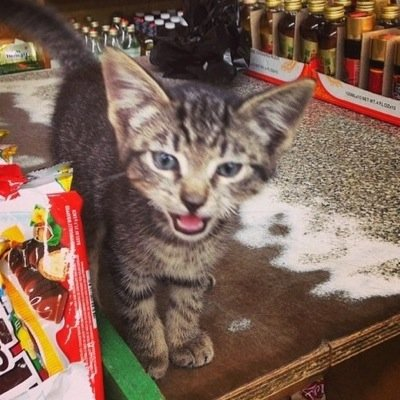 Bodega Cats (@Bodegacats_) Twitter profile photo