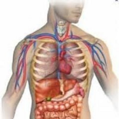 Mastering Anatomy And Physiology - Help To Make It Easy