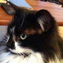 catlady (@230cws) Twitter