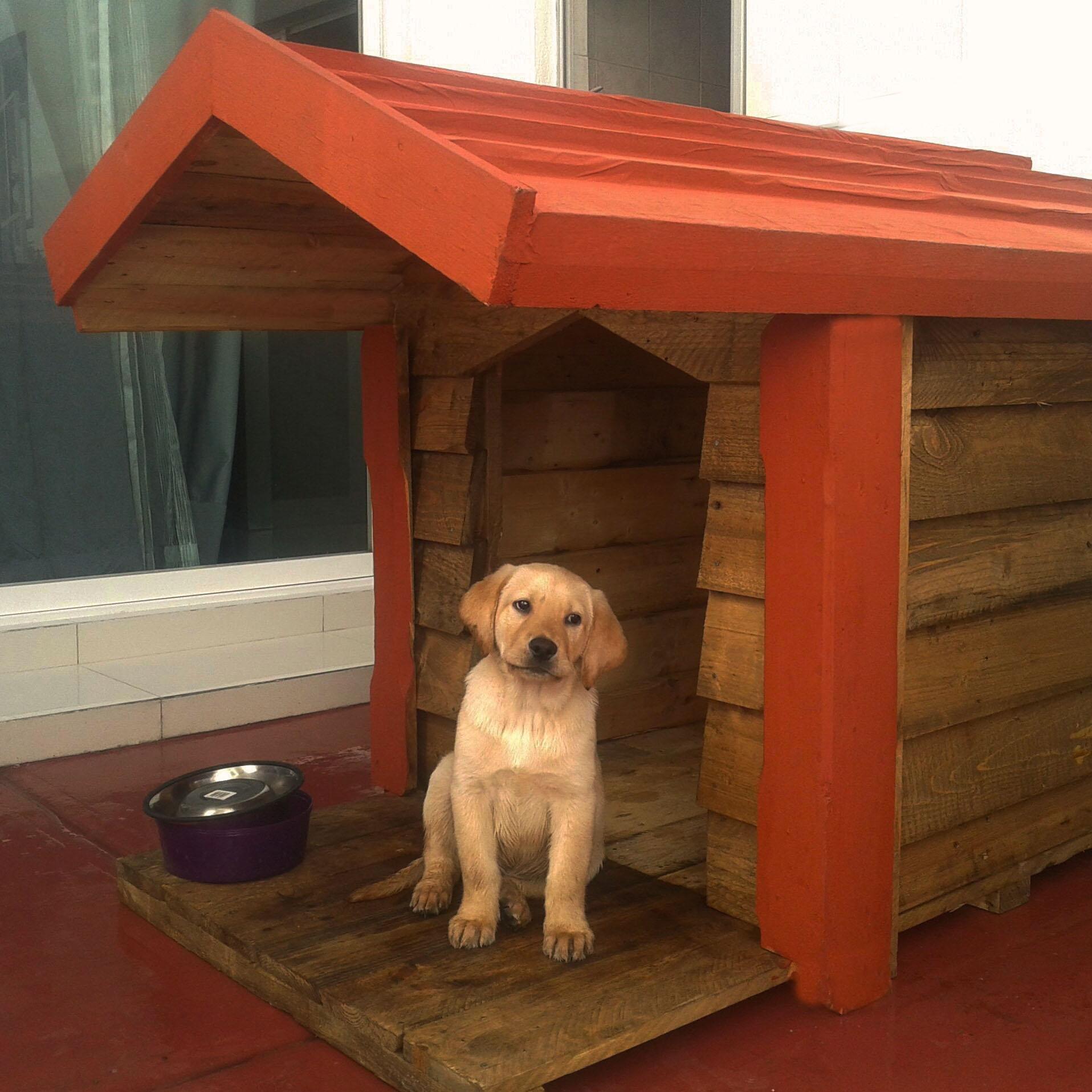 Casas para perros t for Casas para perros