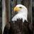 Bird_TLC's avatar