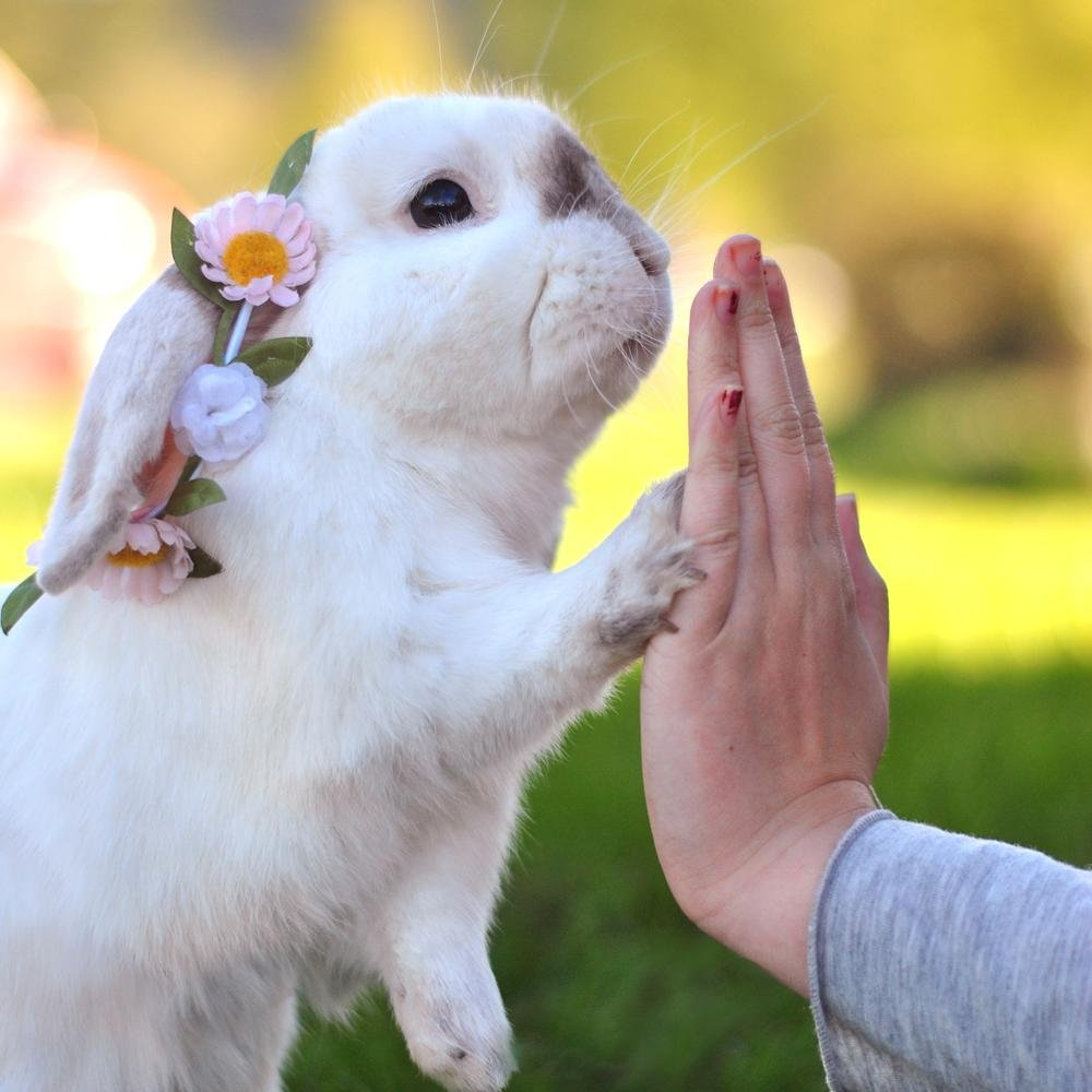 exempel the bunny exempelthebunny twitter