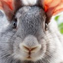 011_rabbit (@011_rabbit) Twitter