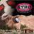 KTNN AM 660 FM 101.5