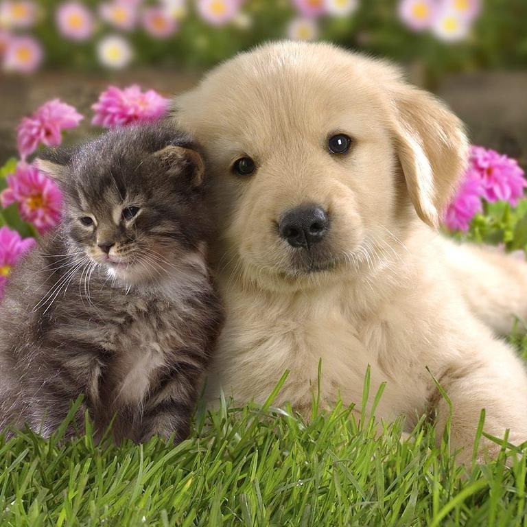 かわいい犬猫たちの画像