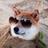disaster_dog