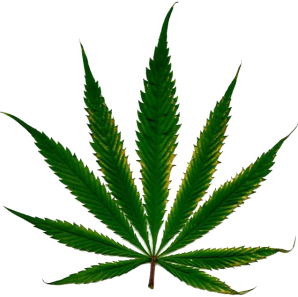 @marijuana_feed