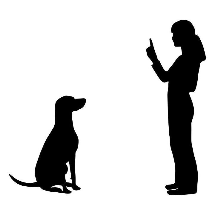 Pet Care Anytime