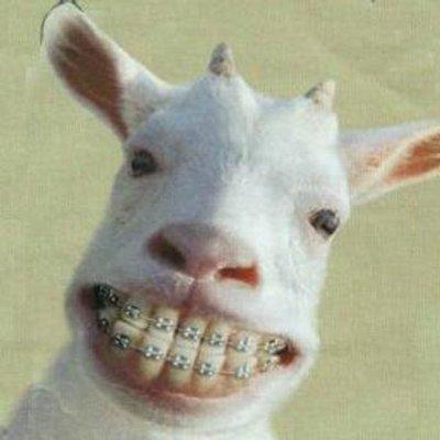 Funny Goat Goatbotsca Twitter