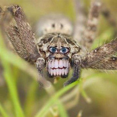 how to kill spider when arachnophobic