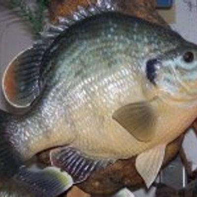 Kens fish farm kensfishfarm twitter for Georgia fish farms