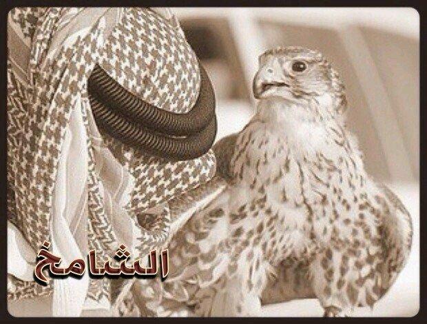 @q8_shamekh