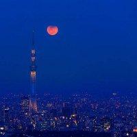 月夜の向日葵