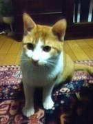 chaemon